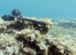 rivista-pesca-sub-arbalete-cressi-cherokee-ocean-90-13